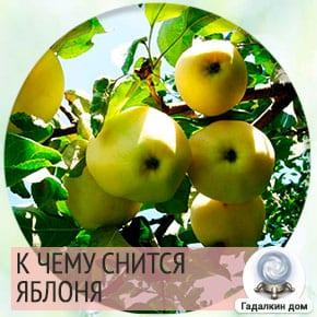 приснилась яблоня