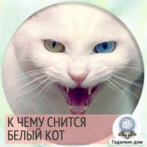 видеть во сне белого кота