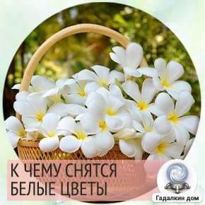 сон белые цветы