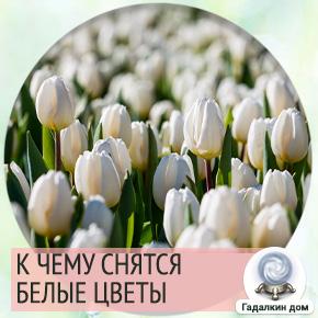 белые цветы во сне