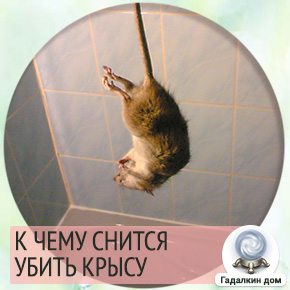 приснилось убить крысу