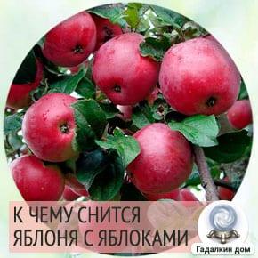 к чему снится яблоня с яблоками спелыми