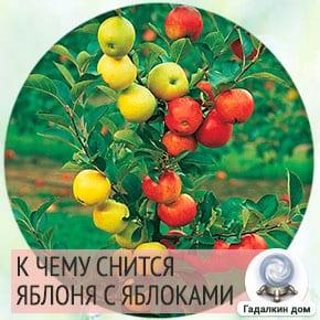 сонник яблоня с яблоками