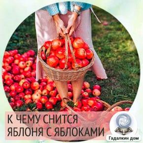приснилась яблоня с яблоками