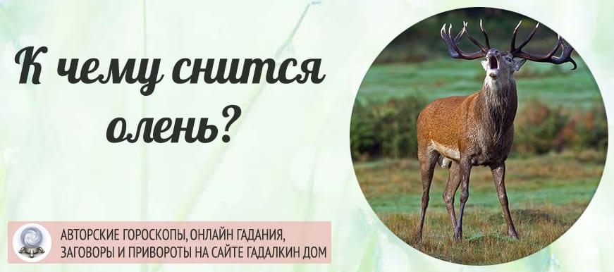 К чему снится олень