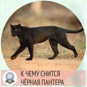приснилась пантера черная