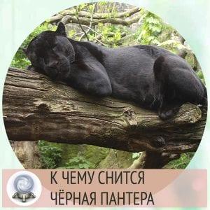 пантера во сне