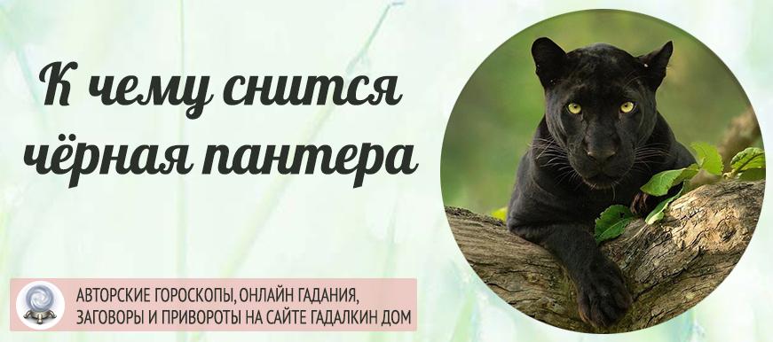 К чему снится чёрная пантера