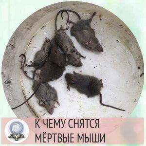 к чему снится мертвая мышь