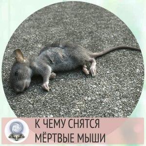 сонник мертвая мышь