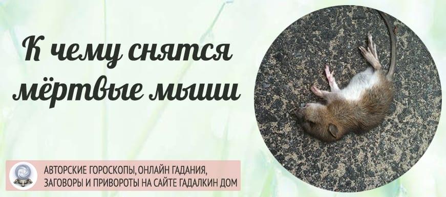 К чему снятся мёртвые мыши