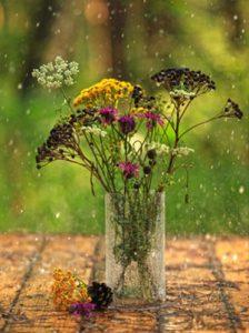 дождь на макрину