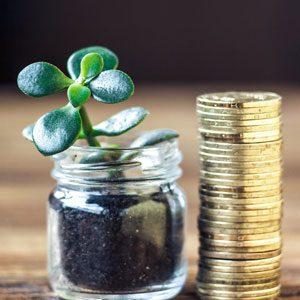 растим денежное дерево