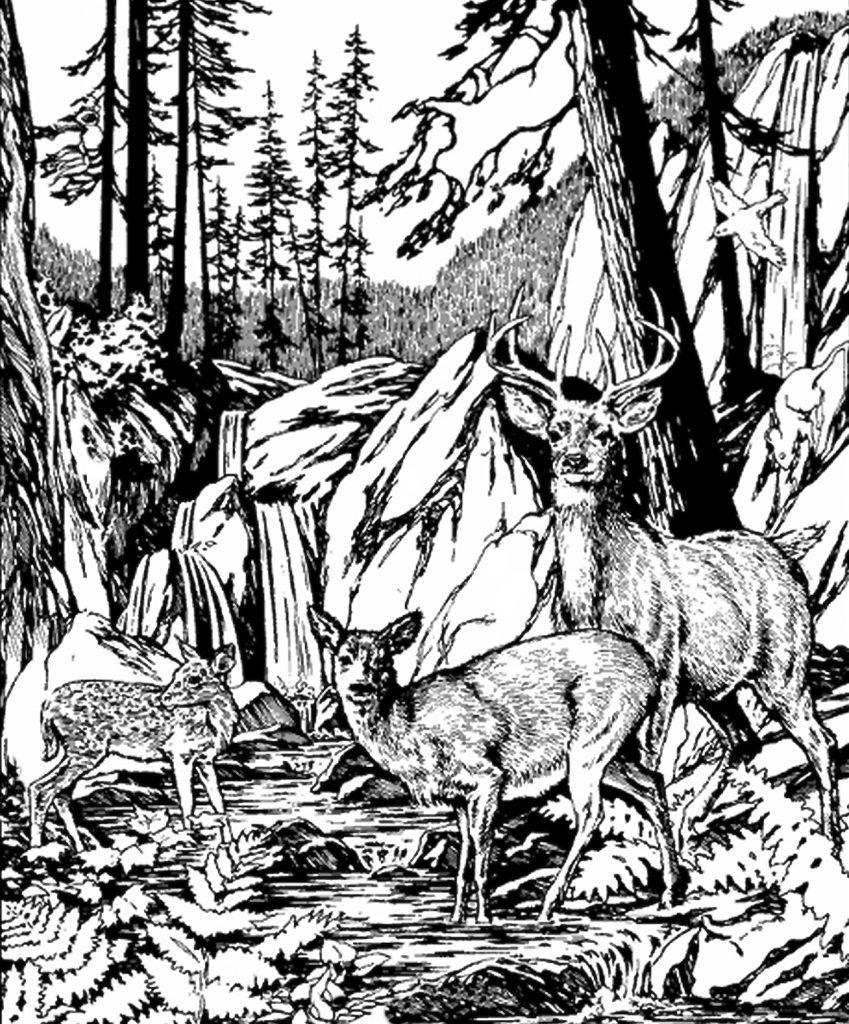 Тест три оленя
