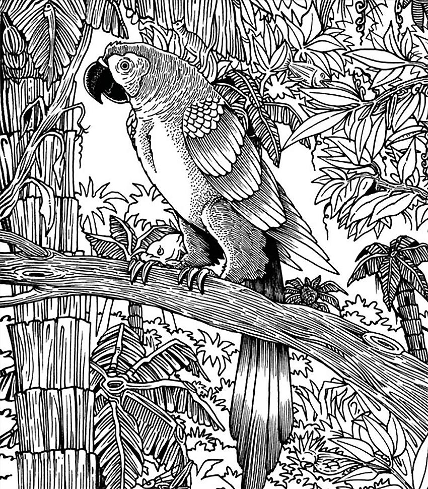 бразильский тест попугай
